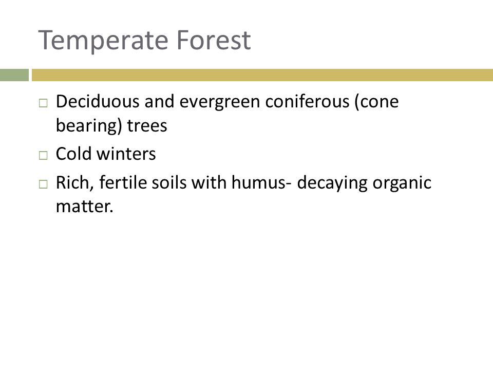 Temperate Forest Deciduous and evergreen coniferous (cone bearing) trees.