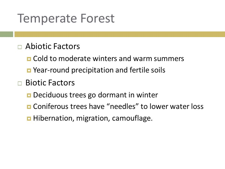 Temperate Forest Abiotic Factors Biotic Factors