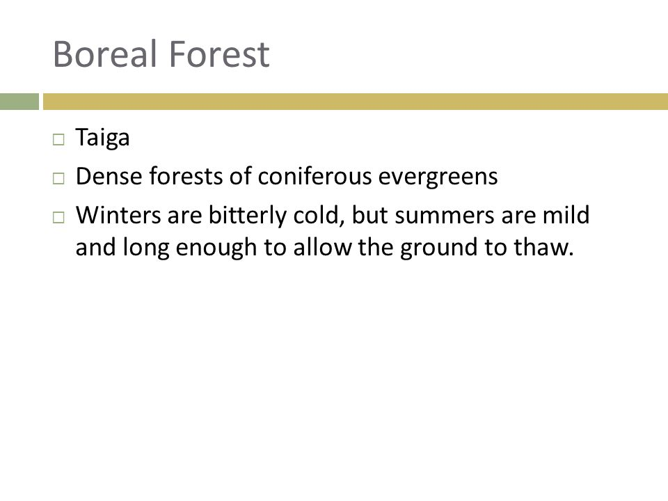 Boreal Forest Taiga Dense forests of coniferous evergreens
