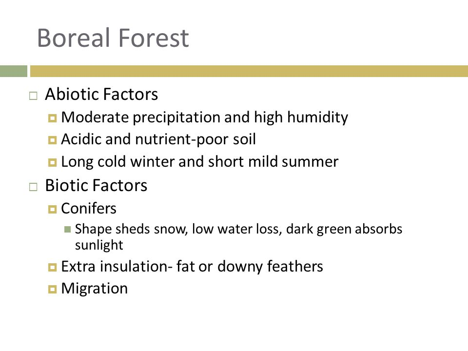 Boreal Forest Abiotic Factors Biotic Factors