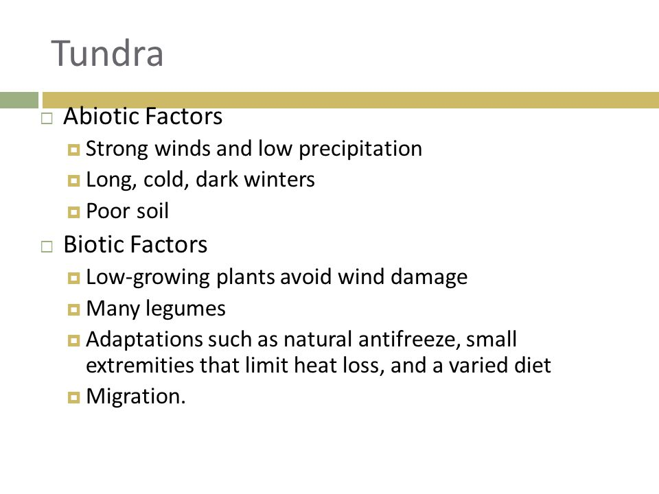 Tundra Abiotic Factors Biotic Factors