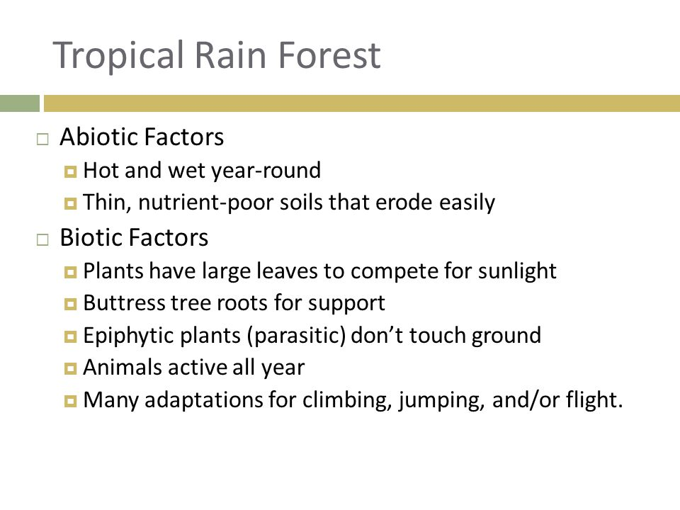 Tropical Rain Forest Abiotic Factors Biotic Factors