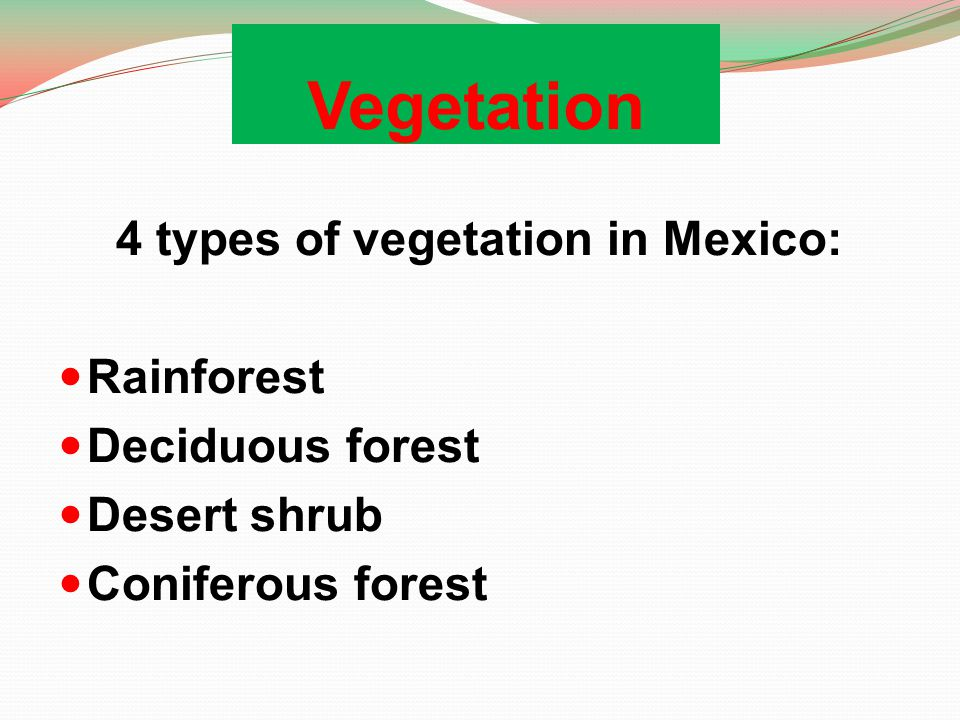 4 types of vegetation in Mexico: