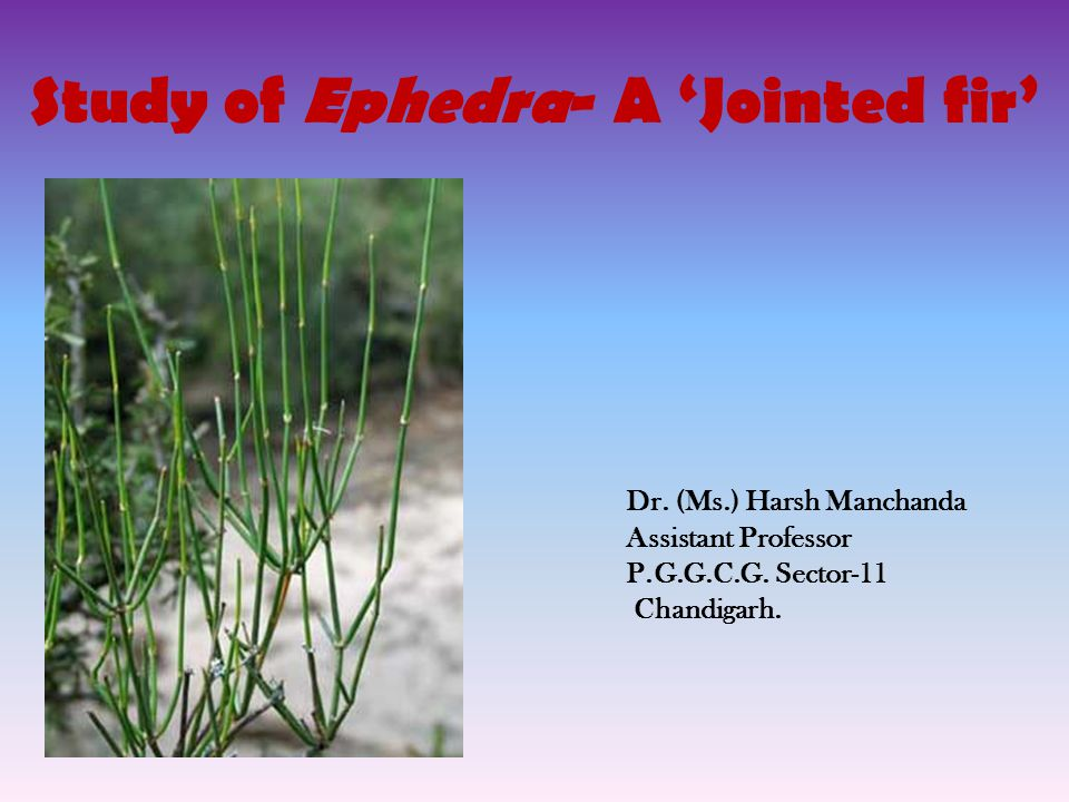 Study of Ephedra- A 'Jointed fir'