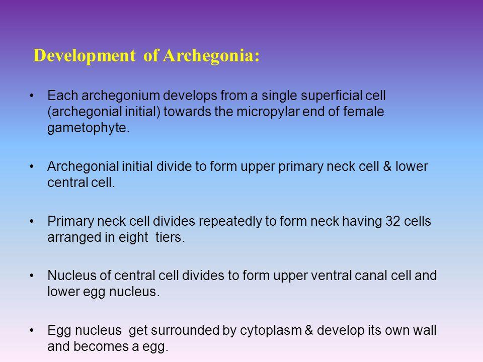 Development of Archegonia: