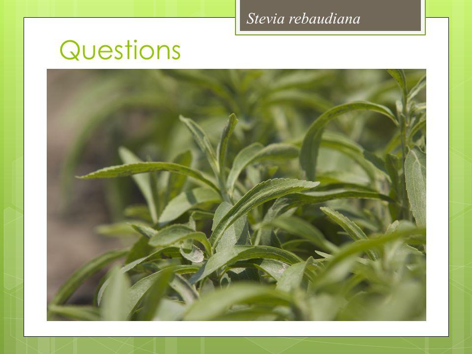 Stevia rebaudiana Questions