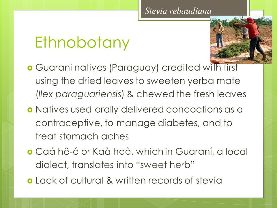 Ethnobotany Stevia rebaudiana