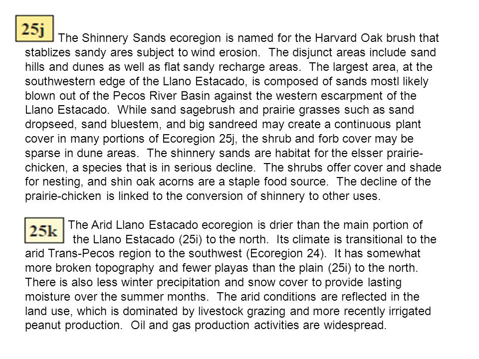 The Shinnery Sands ecoregion is named for the Harvard Oak brush that stablizes sandy ares subject to wind erosion. The disjunct areas include sand hills and dunes as well as flat sandy recharge areas. The largest area, at the southwestern edge of the Llano Estacado, is composed of sands mostl likely blown out of the Pecos River Basin against the western escarpment of the Llano Estacado. While sand sagebrush and prairie grasses such as sand dropseed, sand bluestem, and big sandreed may create a continuous plant cover in many portions of Ecoregion 25j, the shrub and forb cover may be sparse in dune areas. The shinnery sands are habitat for the elsser prairie-chicken, a species that is in serious decline. The shrubs offer cover and shade for nesting, and shin oak acorns are a staple food source. The decline of the prairie-chicken is linked to the conversion of shinnery to other uses.