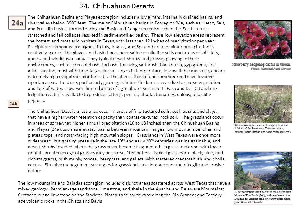 24. Chihuahuan Deserts
