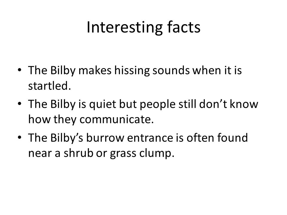 Interesting facts The Bilby makes hissing sounds when it is startled.