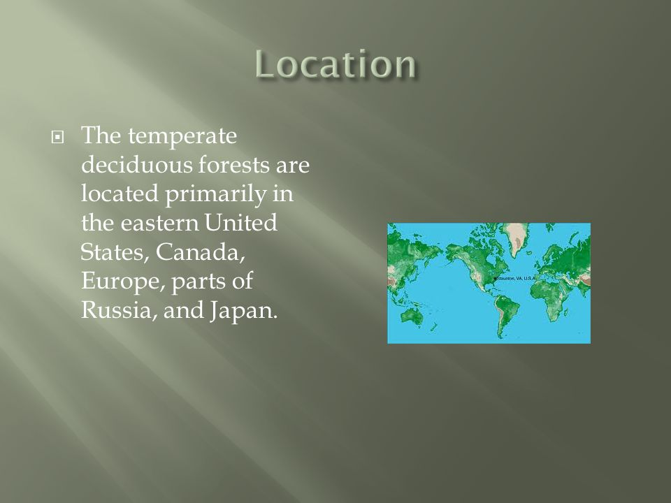 Location The temperate deciduous forests are located primarily in the eastern United States, Canada, Europe, parts of Russia, and Japan.