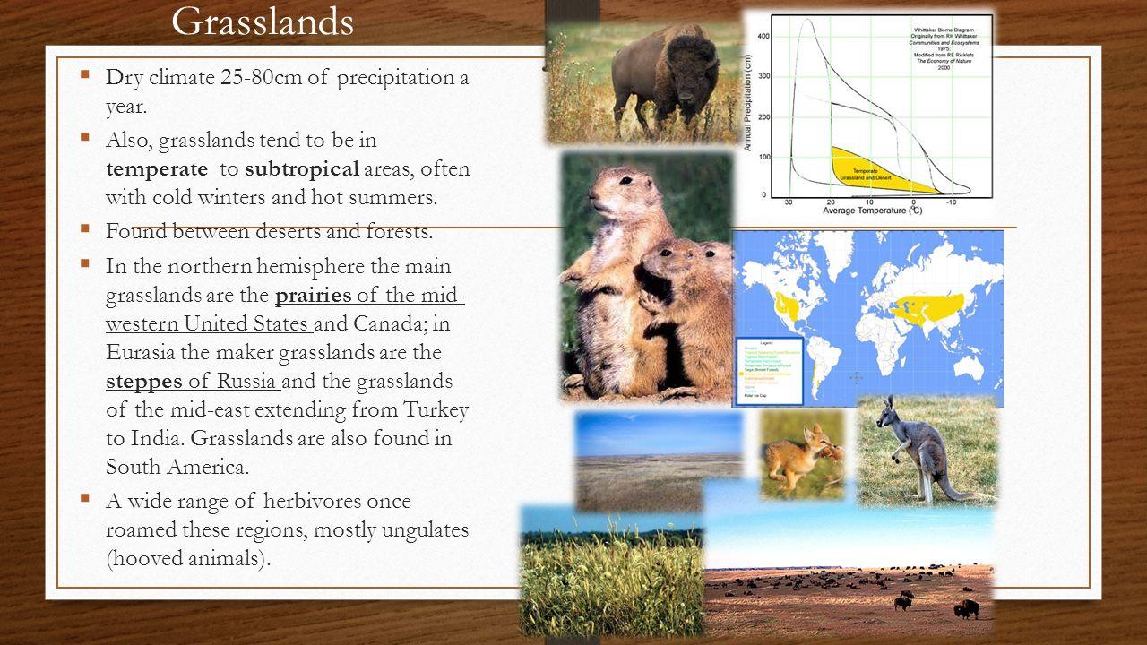 Grasslands Dry climate 25-80cm of precipitation a year.