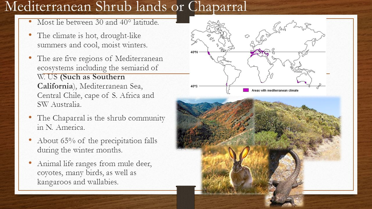 Mediterranean Shrub lands or Chaparral