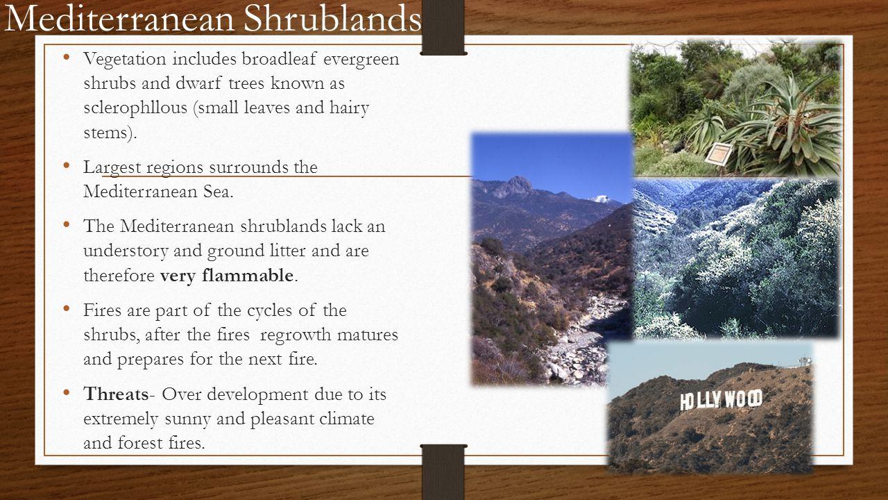 Mediterranean Shrublands