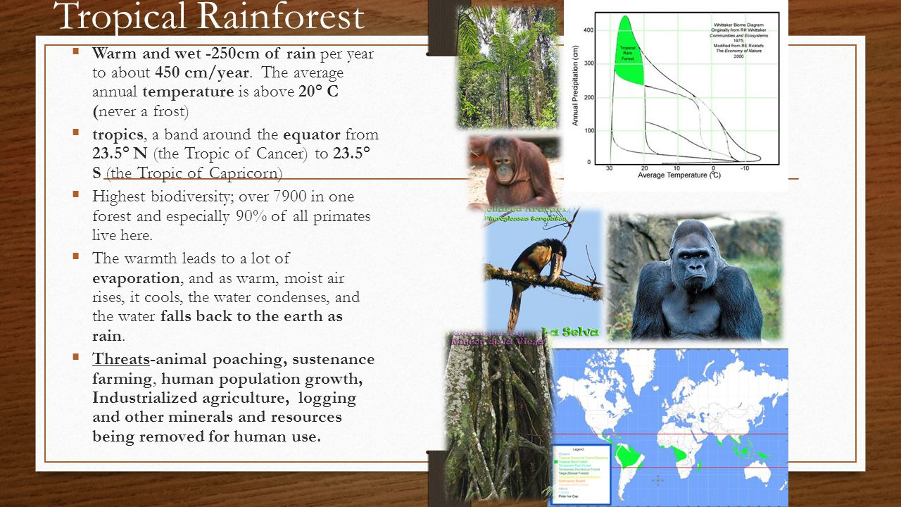 Tropical Rainforest Warm and wet -250cm of rain per year to about 450 cm/year. The average annual temperature is above 20° C (never a frost)