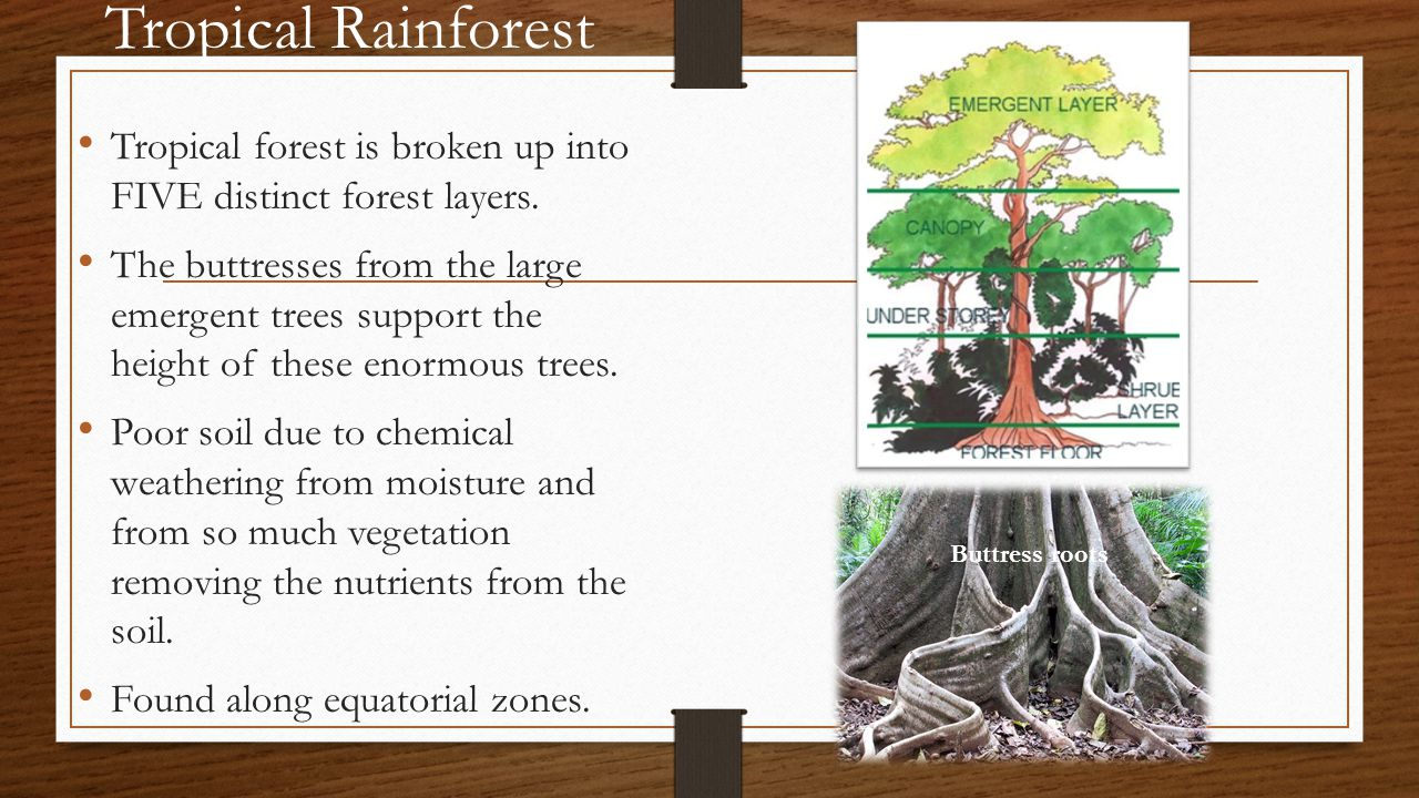 Tropical Rainforest Tropical forest is broken up into FIVE distinct forest layers.