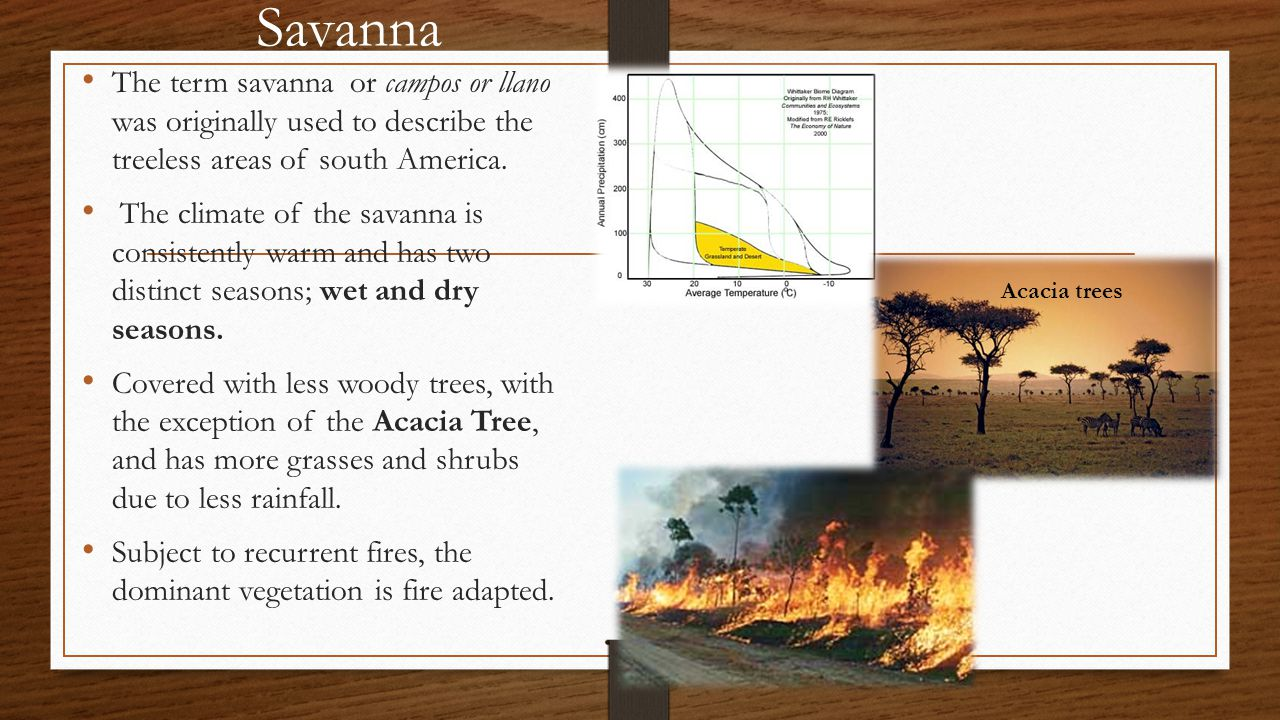 Savanna The term savanna or campos or llano was originally used to describe the treeless areas of south America.
