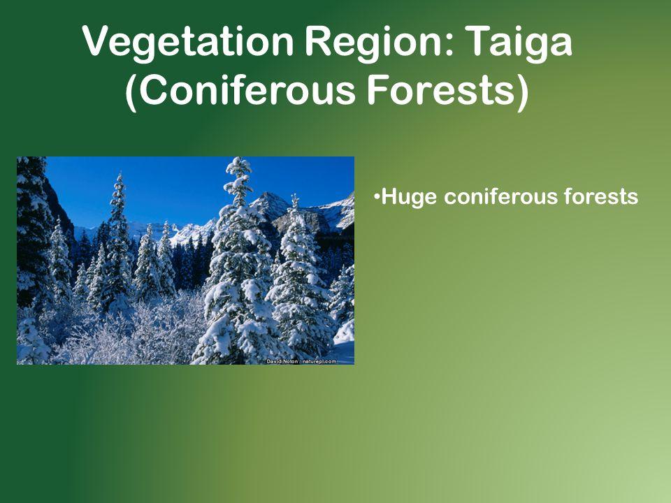 Vegetation Region: Taiga (Coniferous Forests)