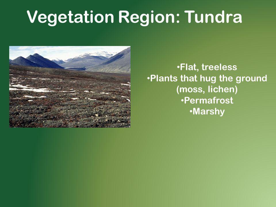 Vegetation Region: Tundra