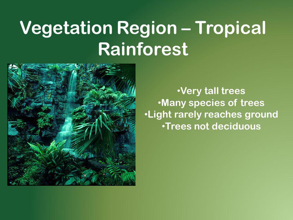 Vegetation Region – Tropical Rainforest