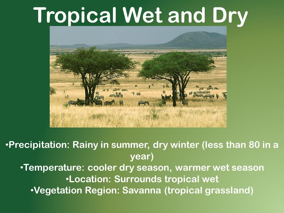 Tropical Wet and Dry Precipitation: Rainy in summer, dry winter (less than 80 in a year) Temperature: cooler dry season, warmer wet season.