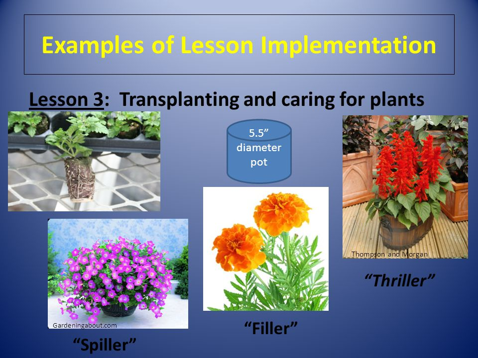 Examples of Lesson Implementation