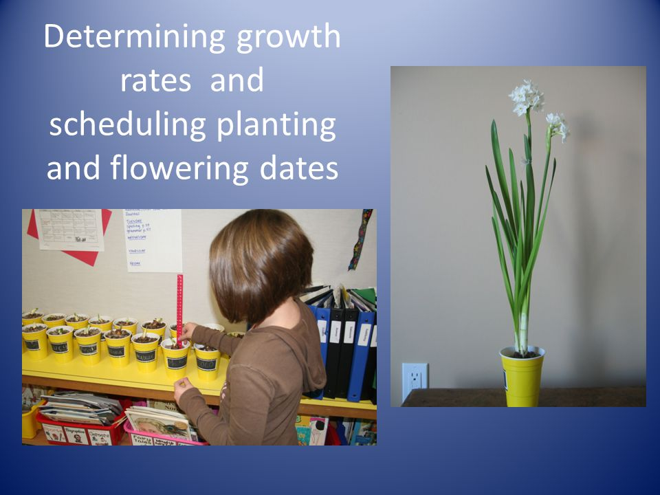Determining growth rates and scheduling planting and flowering dates