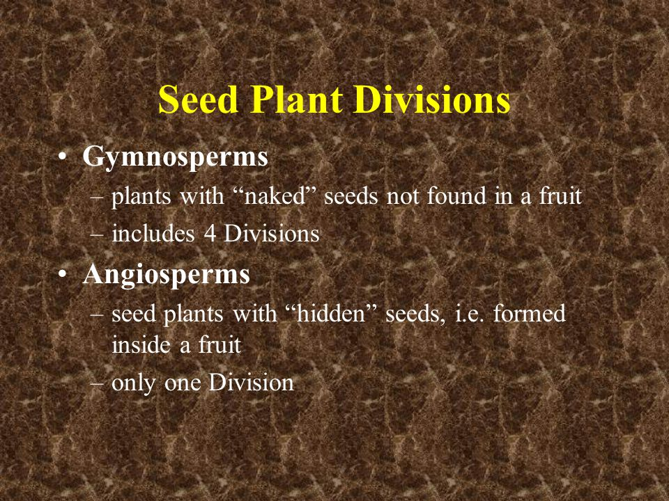 Seed Plant Divisions Gymnosperms Angiosperms