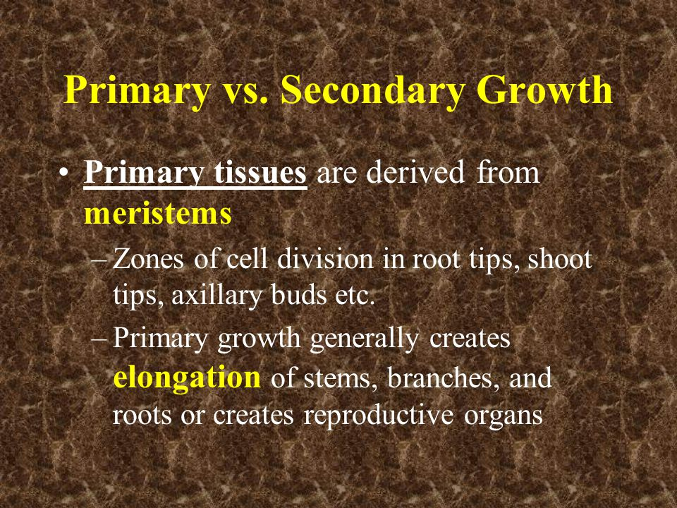 Primary vs. Secondary Growth