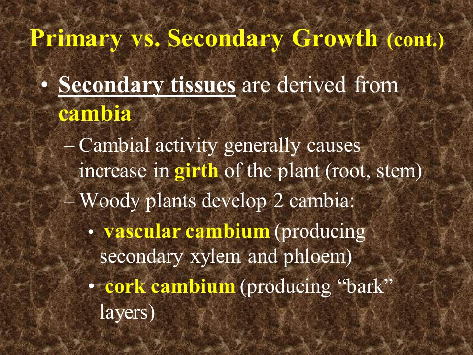 Primary vs. Secondary Growth (cont.)