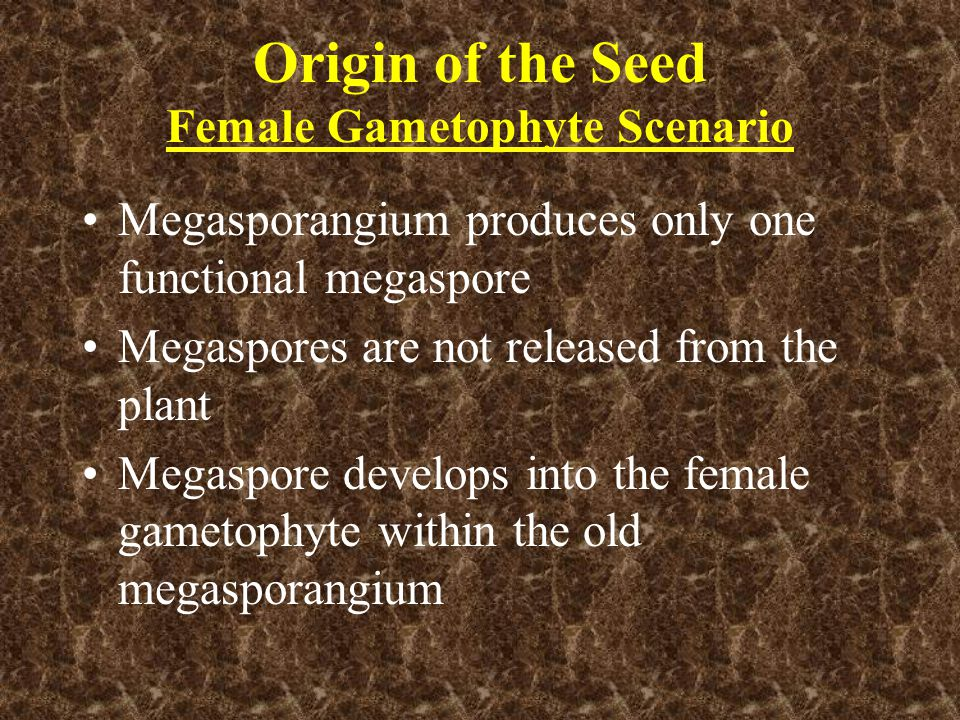 Origin of the Seed Female Gametophyte Scenario