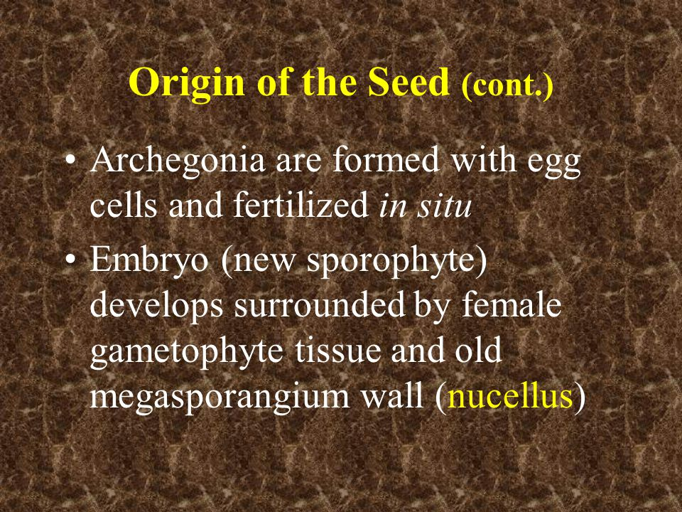 Origin of the Seed (cont.)