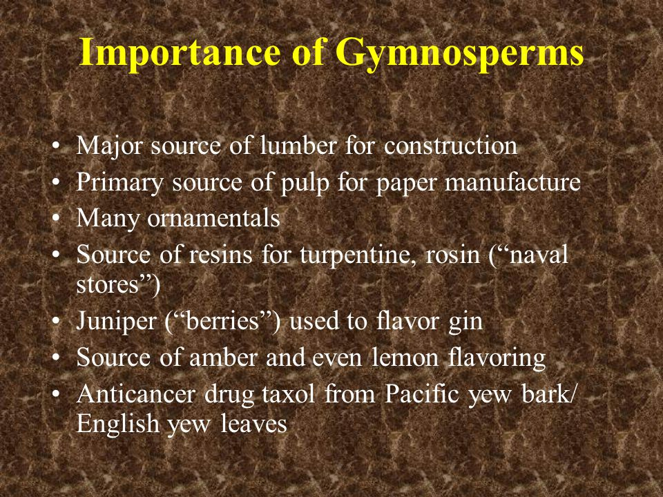 Importance of Gymnosperms