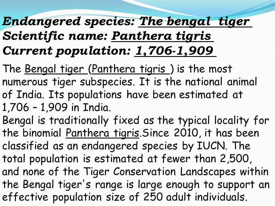 Endangered species: The bengal tiger Scientific name: Panthera tigris