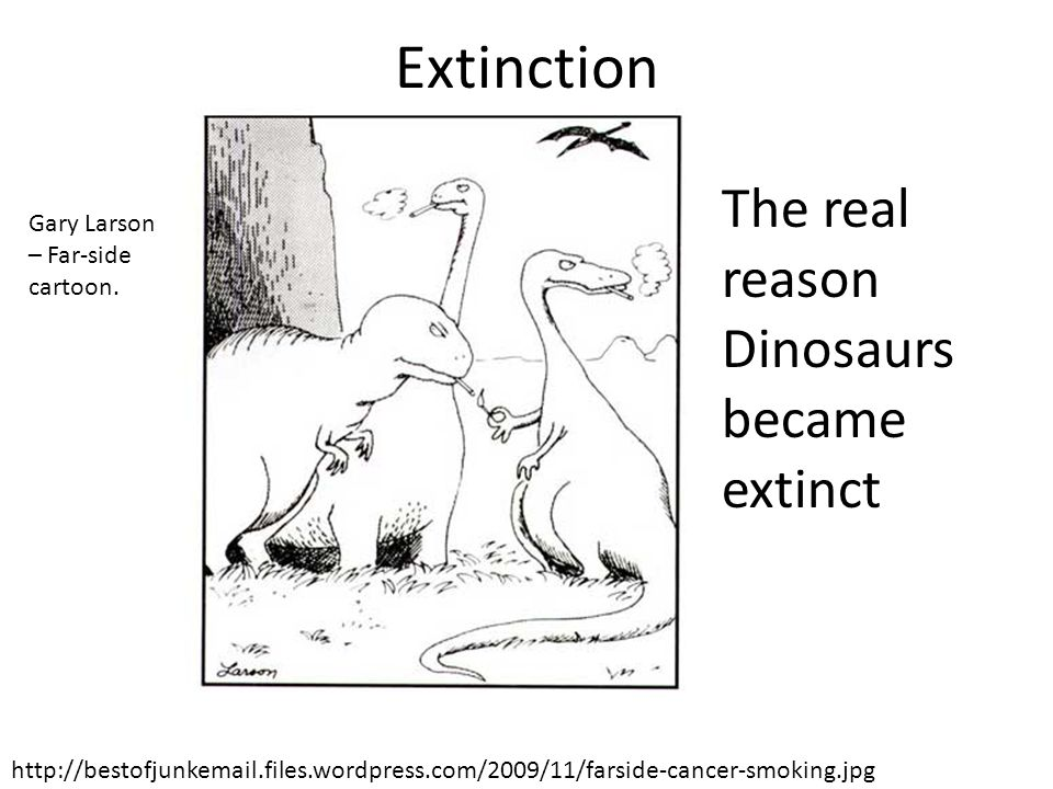Extinction The real reason Dinosaurs became extinct