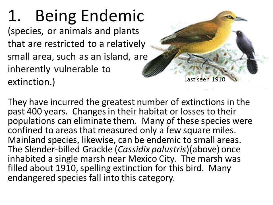 Being Endemic