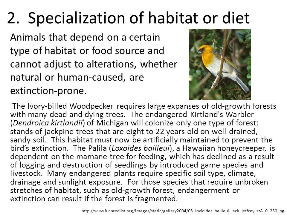 2. Specialization of habitat or diet