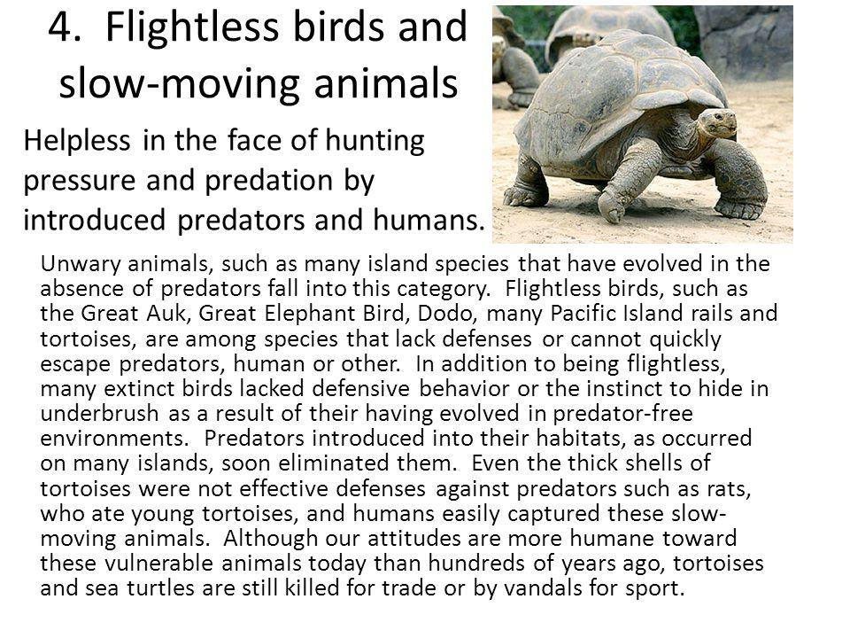4. Flightless birds and slow‑moving animals