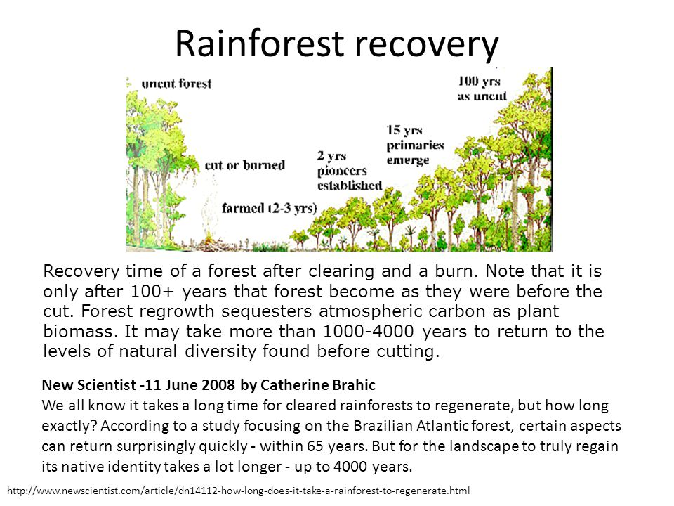 Rainforest recovery