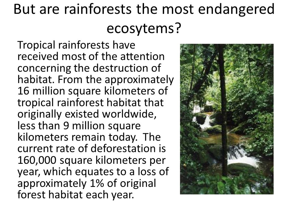 But are rainforests the most endangered ecosytems