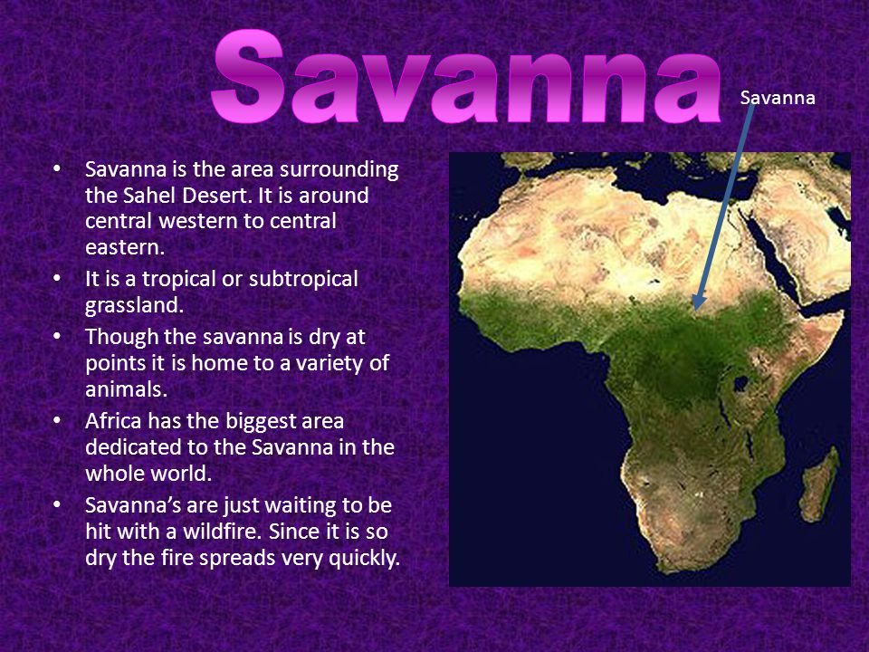 Savanna Savanna. Savanna is the area surrounding the Sahel Desert. It is around central western to central eastern.