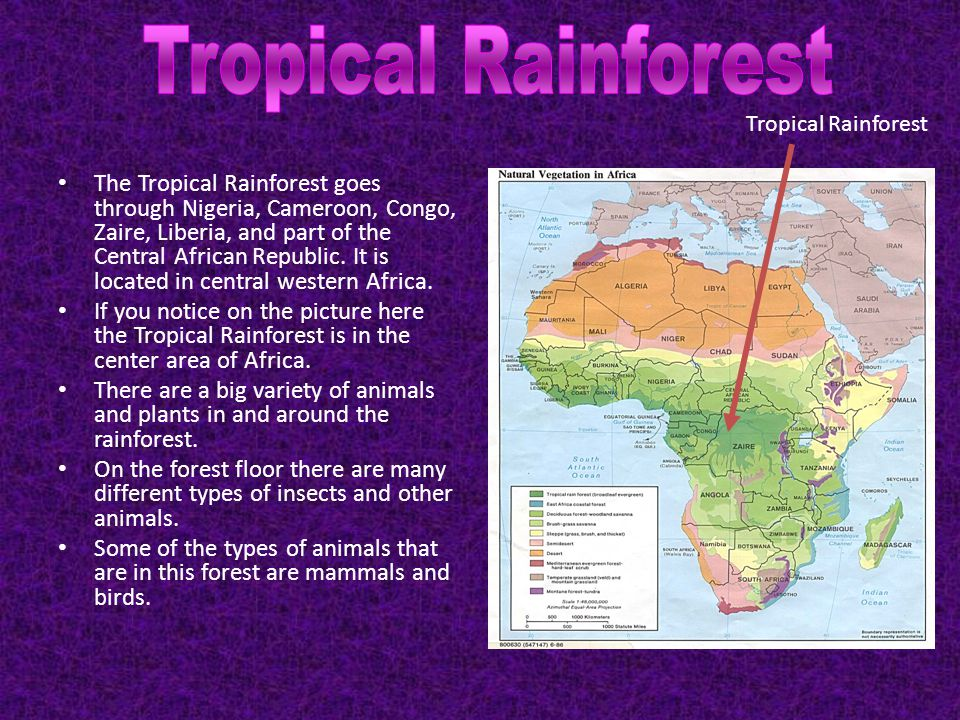 Tropical Rainforest Tropical Rainforest.