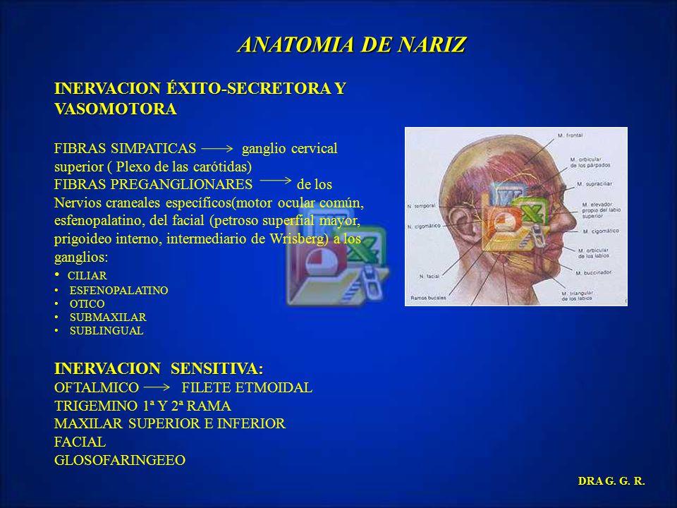 ANATOMIA DE NARIZ INERVACION ÉXITO-SECRETORA Y VASOMOTORA