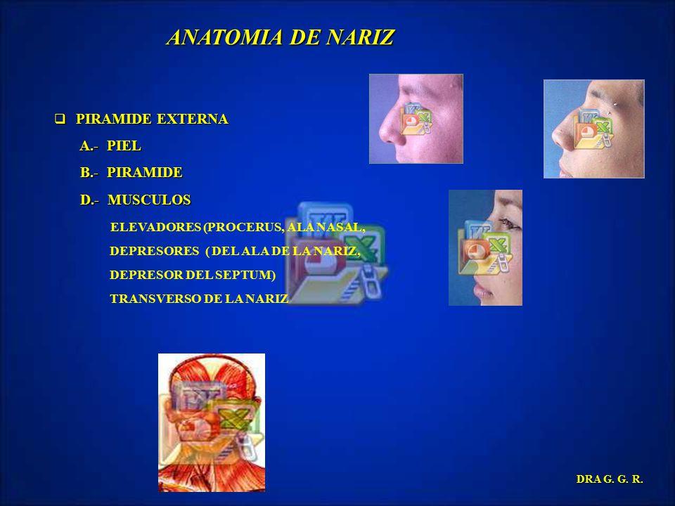 ANATOMIA DE NARIZ A.- PIEL B.- PIRAMIDE D.- MUSCULOS