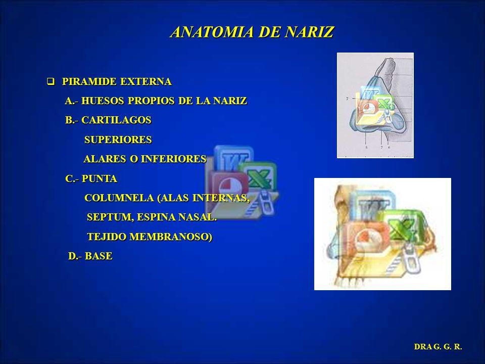 ANATOMIA DE NARIZ A.- HUESOS PROPIOS DE LA NARIZ B.- CARTILAGOS