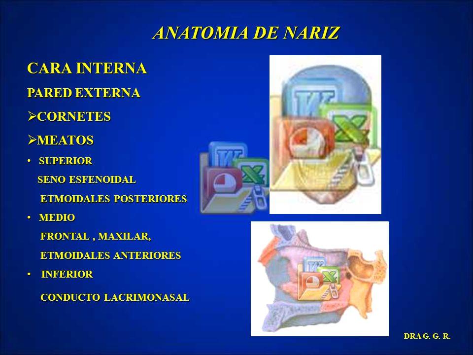 ANATOMIA DE NARIZ CARA INTERNA PARED EXTERNA CORNETES MEATOS SUPERIOR