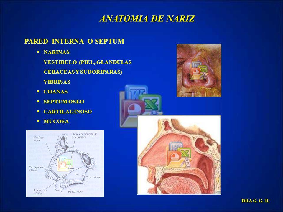 ANATOMIA DE NARIZ PARED INTERNA O SEPTUM NARINAS