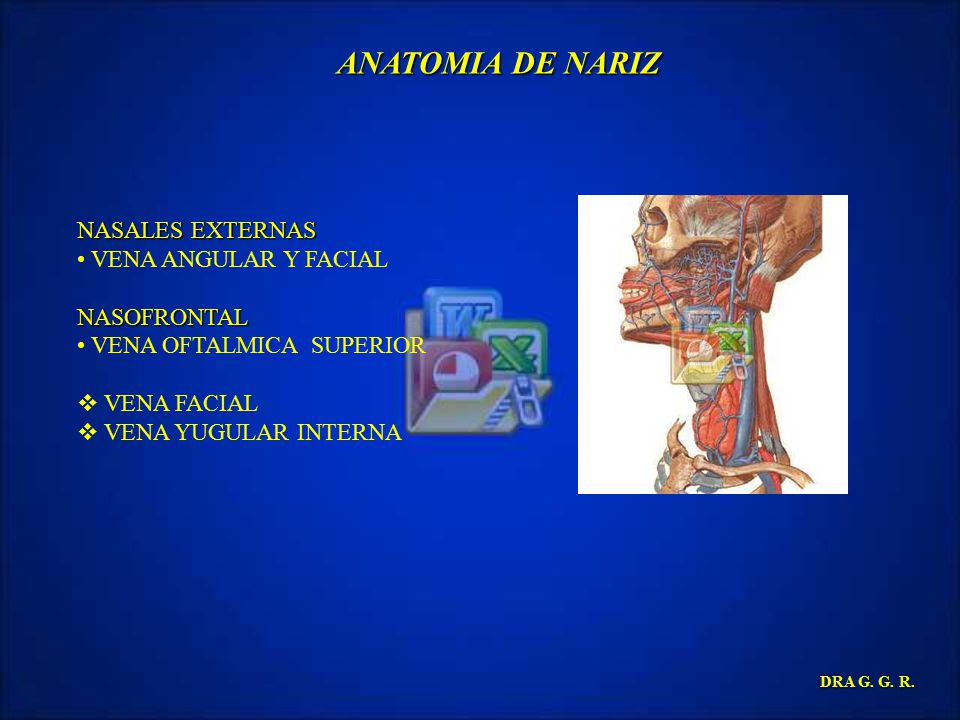 ANATOMIA DE NARIZ NASALES EXTERNAS VENA ANGULAR Y FACIAL NASOFRONTAL