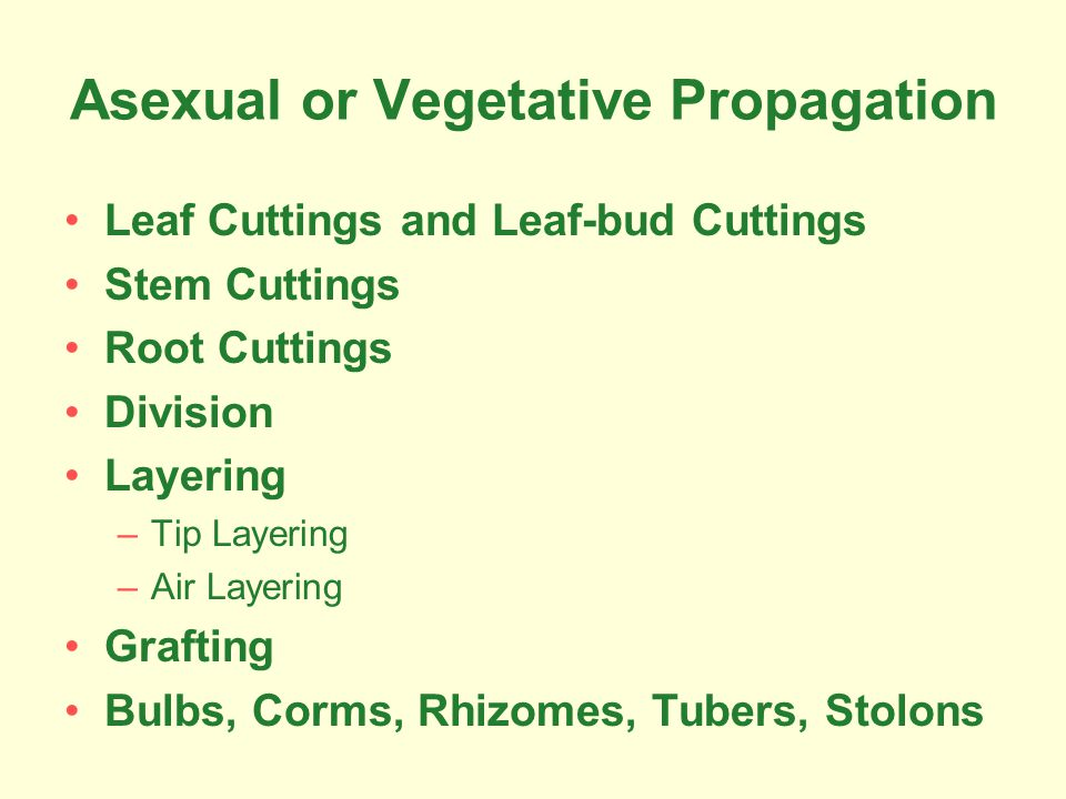Asexual or Vegetative Propagation