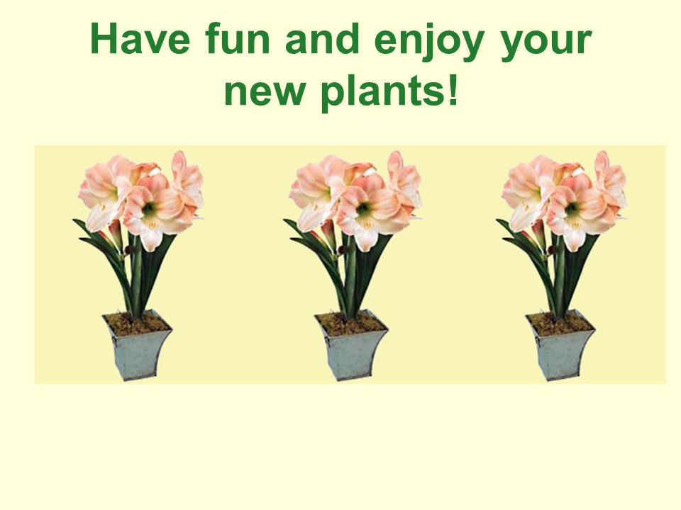 Have fun and enjoy your new plants!